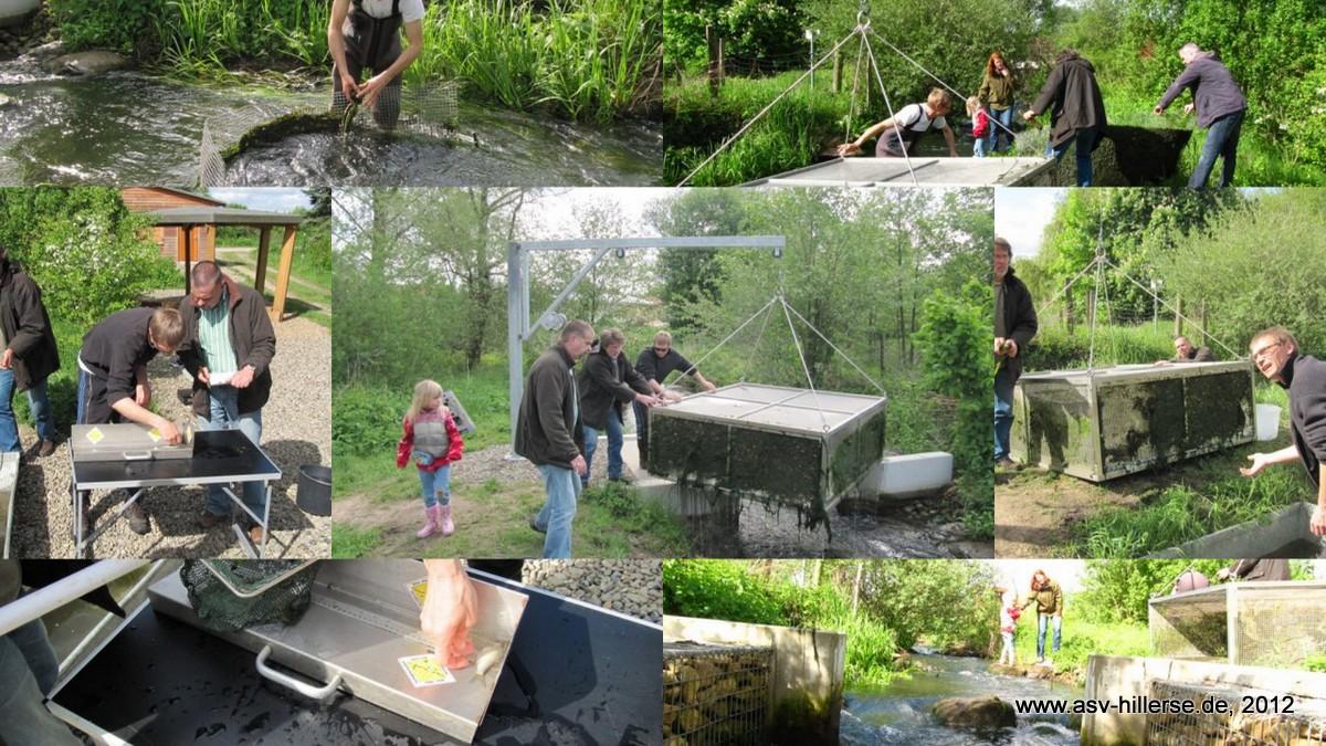 Fischmonitoring 2012 Meinersen/Oker