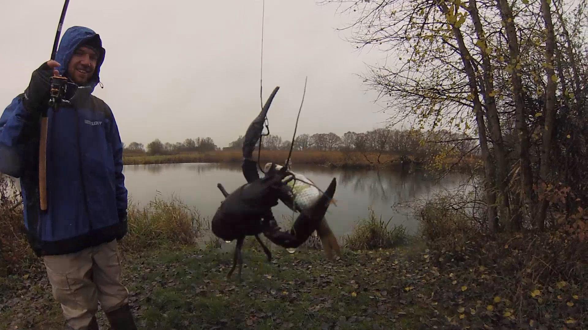 Europäischer Edelkrebs in Hillerser Gewässer gesichtet !
