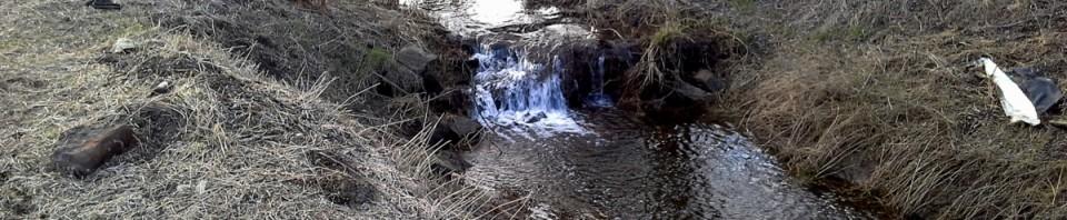 Lebensraum erhalten – aktiver Naturschutz an der Oker
