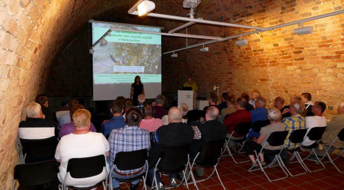 Der Europäische Aal – Gefährdungssituation und Rettungsprogramme mit Hilfe der Angelvereine