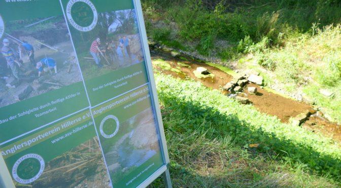 ASV Hillerse schafft neuen Lebensraum durch Umgestaltung eines Gewässers