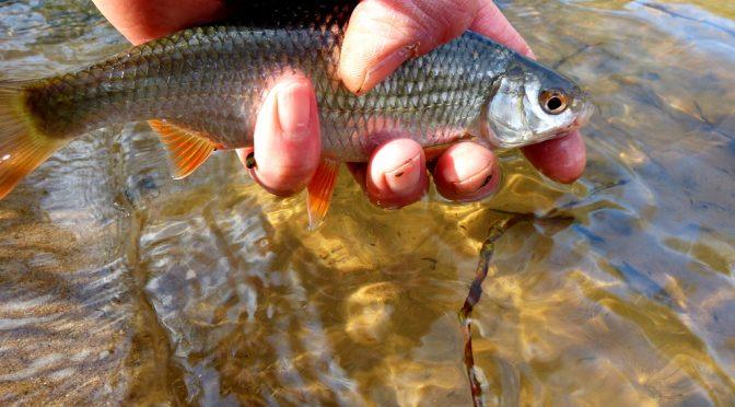 ASV Hillerse veranstaltet Hegefischen für jugendliche Angler