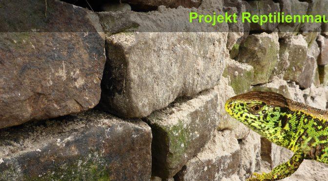 Reptilienmauer angelegt – Neuer Lebensraum für Reptilien in Hillerse