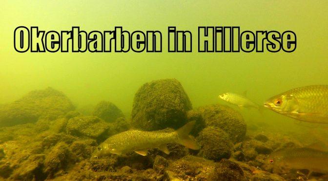 Den Okerbarben auf der Spur (Film in full-HD) – Aktion Fischotterschutz